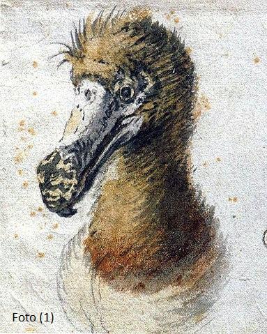 383px-Saftleven_dodo