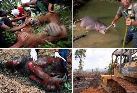 Deforestazione in Borneo