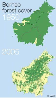 Deforestazione isola del Borneo