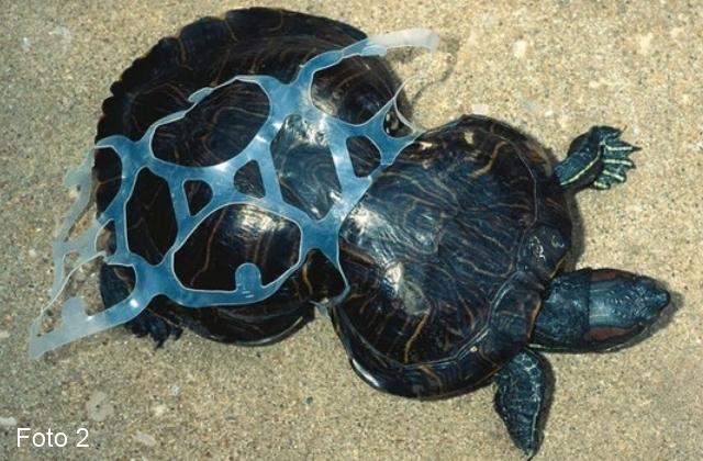 La plastica non è amica della natura_02