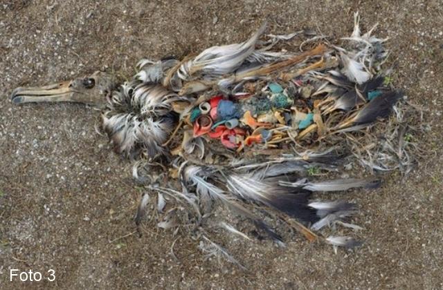 La plastica non è amica della natura_03
