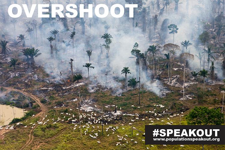 Overshoot-Cows-Smoke
