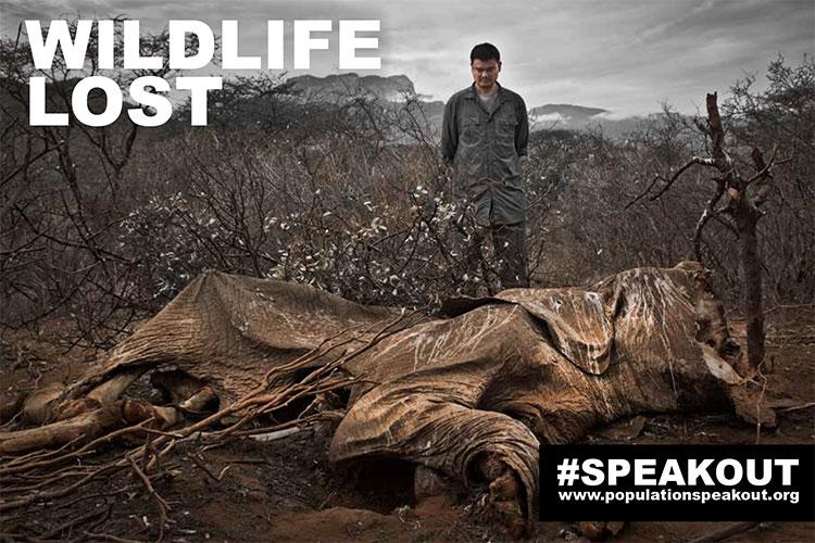 Wildlife-Lost-Elephant-Slaughter