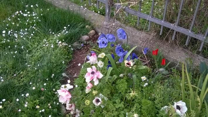 Giardino bio-diversità 05