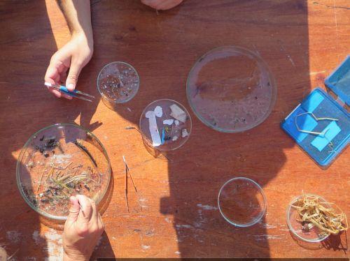 Setaccio manuale microplastiche del Mar Mediterraneo